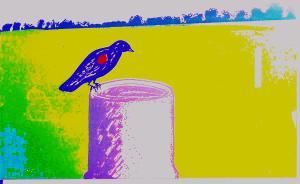 Art -Black Bird Summer -'82 screen print