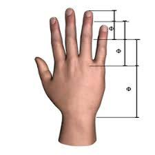 Art - Golden ratio Human Hand