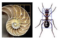 Art - Golden ratio shell and ant