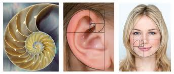 Art - Golden ratio Shell - Ear - Face